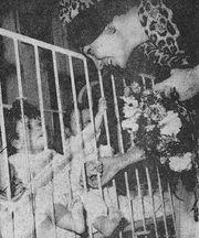 روز مادر پیش از انقلاب